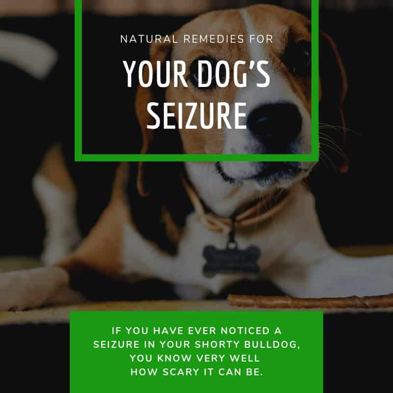 How to Treat Your Dogs Seizure with Natural Remedies