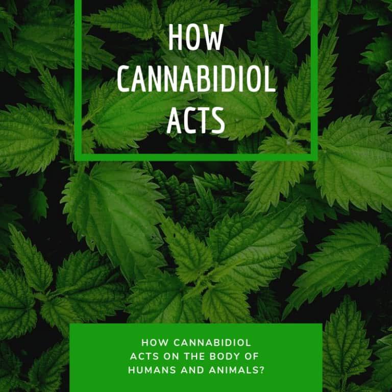 How Cannabidiol acts on the body of humans and animals