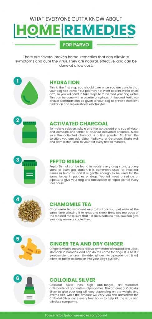 Home Remedies for Parvo Infographic