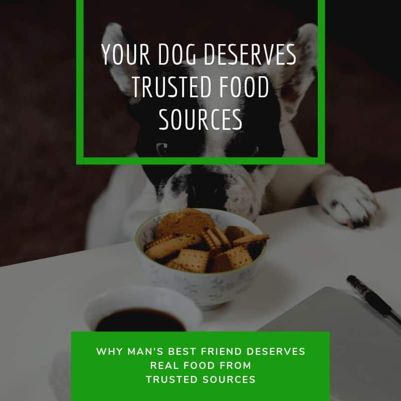 Why Mans Best Friend Deserves Real Food from Trusted Sources