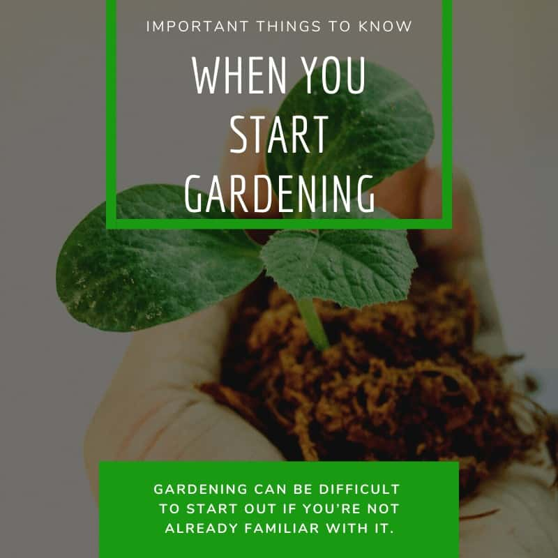 Important Things to Know When You Start Gardening