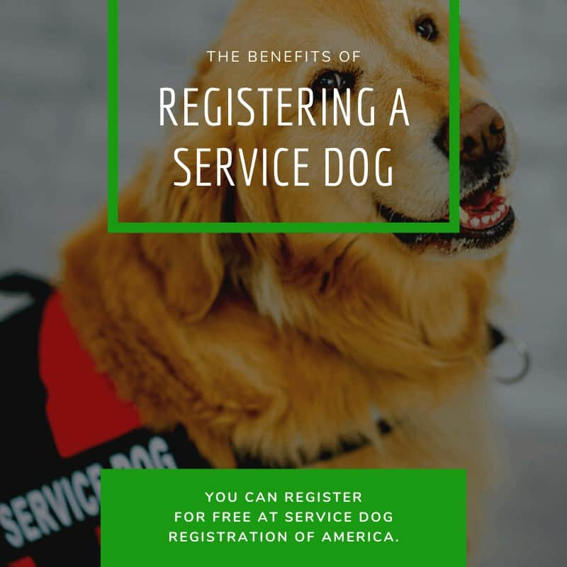 The Benefits Of Registering A Service Dog
