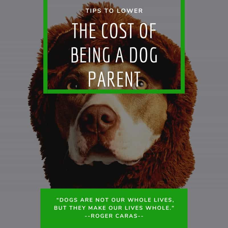 Tips To Lower The Cost Of Being A Dog Parent