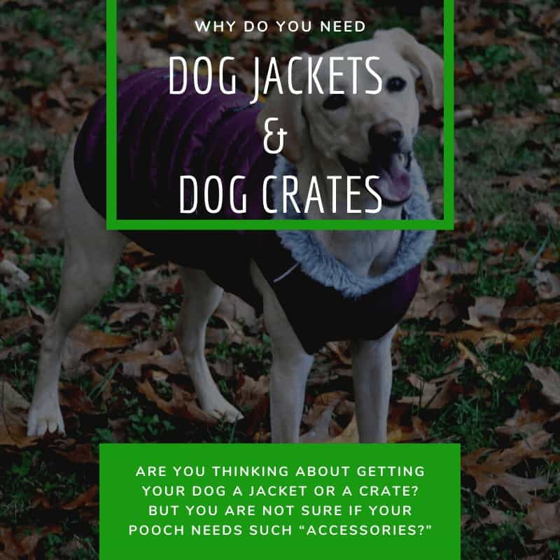 Why Do You Need Dog Jackets and Dog Crates