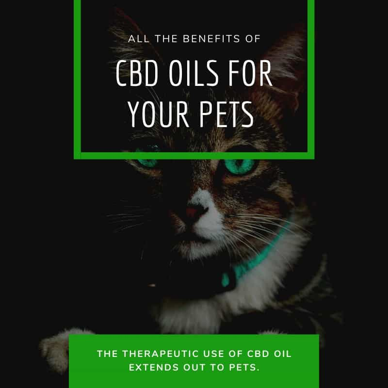 All the Benefits of CBD Oils for Your Pets