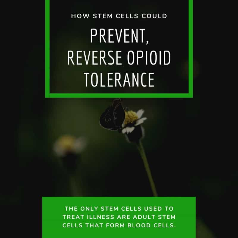 How Stem Cells Could Prevent Even Reverse Opioid Tolerance