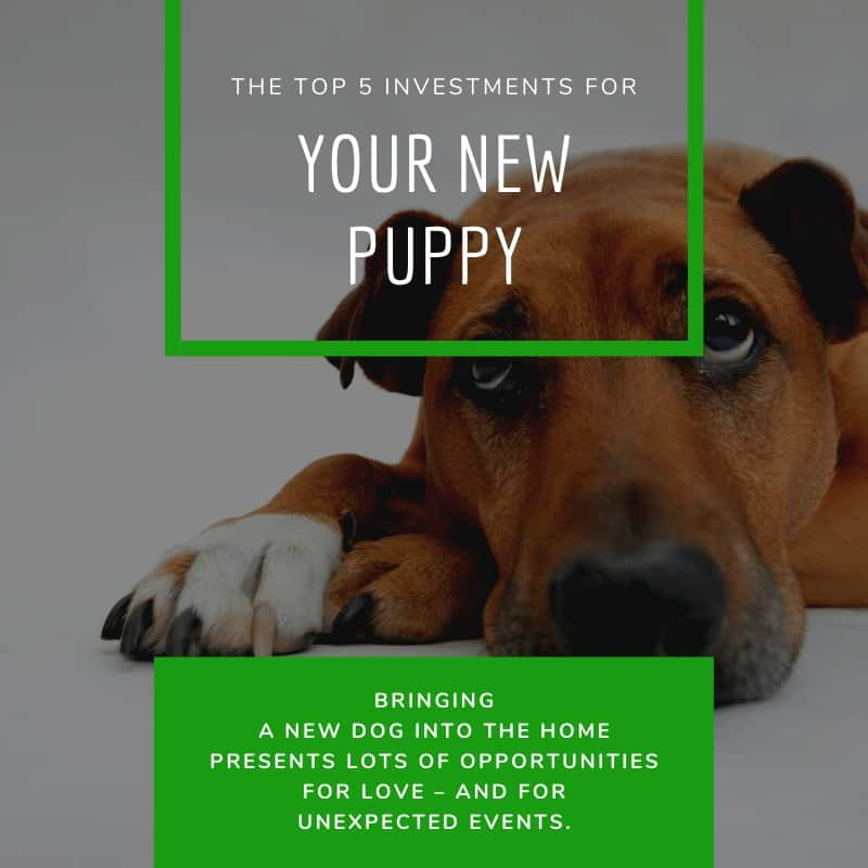 The Top 5 Investments for Your New Puppy