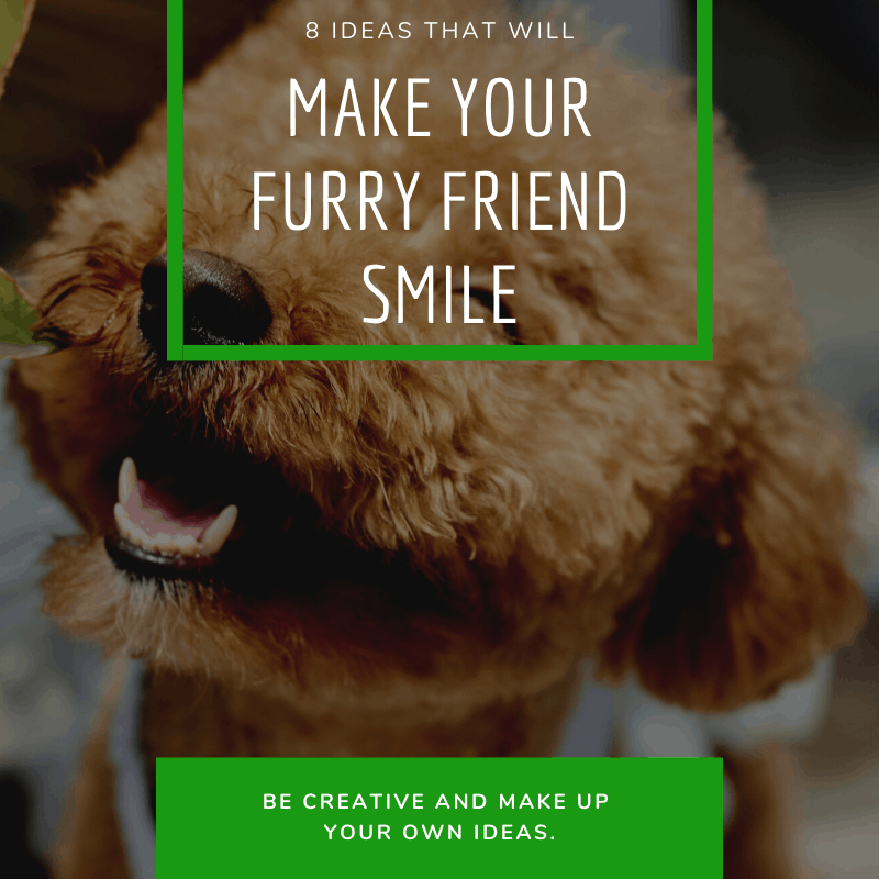 8 Ideas That Will Make Your Furry Friend Smile