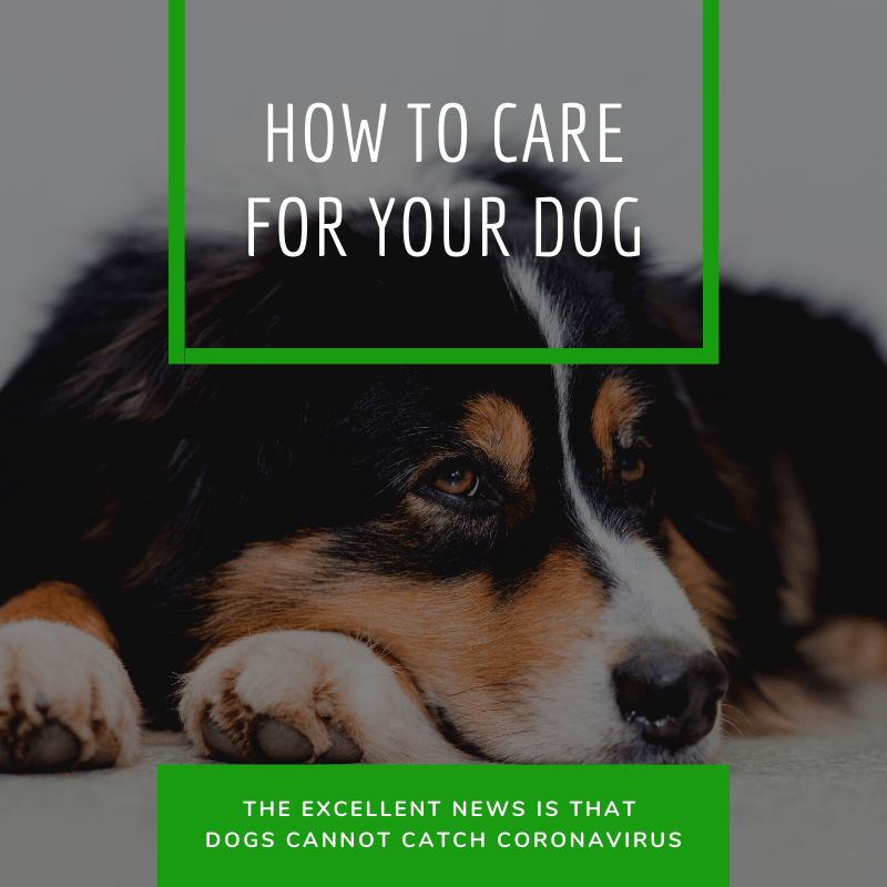 How to care for your dog during coronavirus