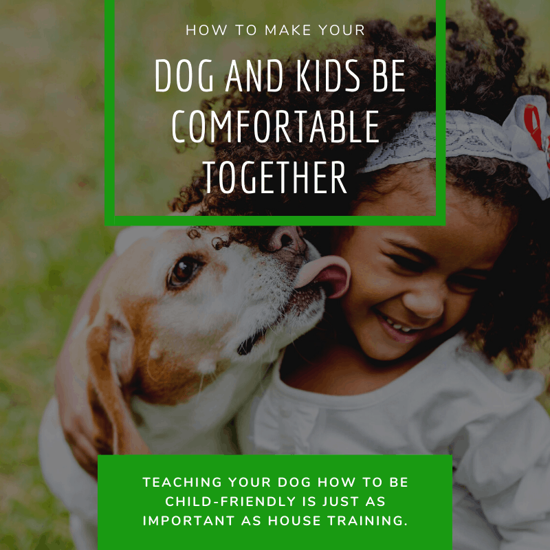 How to Make Your Dog and Kids Be Comfortable Together