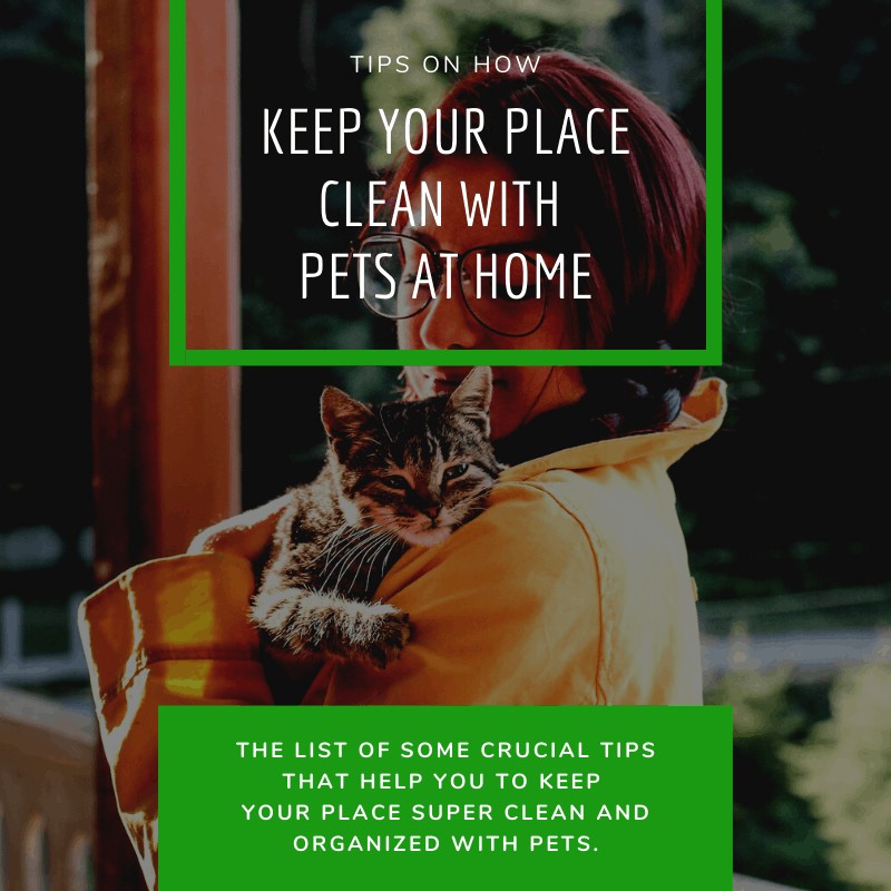 Keep Your Place Clean with Pets at Home