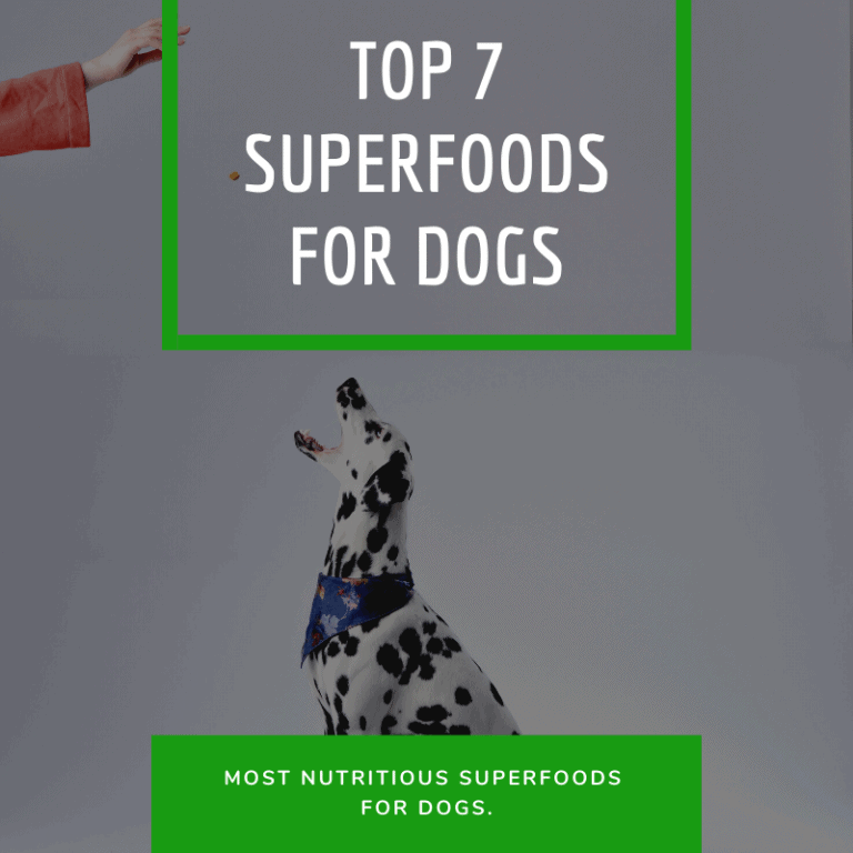 Superfoods for Dogs