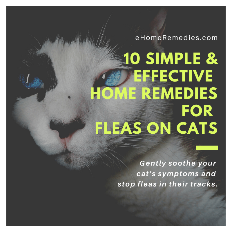 10 Simple & Effective Home Remedies for Fleas on Cats