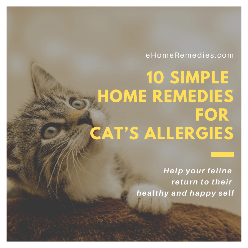 10 Simple Home Remedies for Cats Allergies