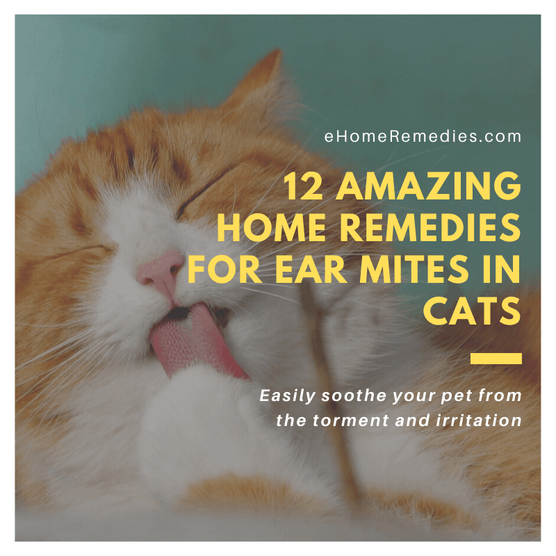12 Amazing Home Remedies for Ear Mites in Cats