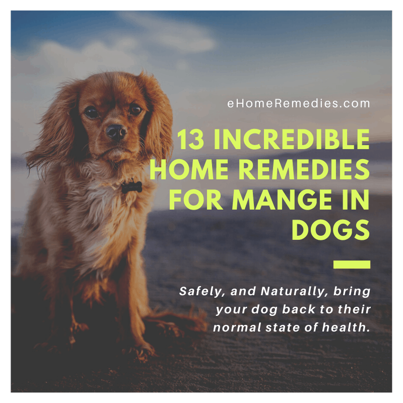 13 Incredible Home Remedies for Mange in Dogs