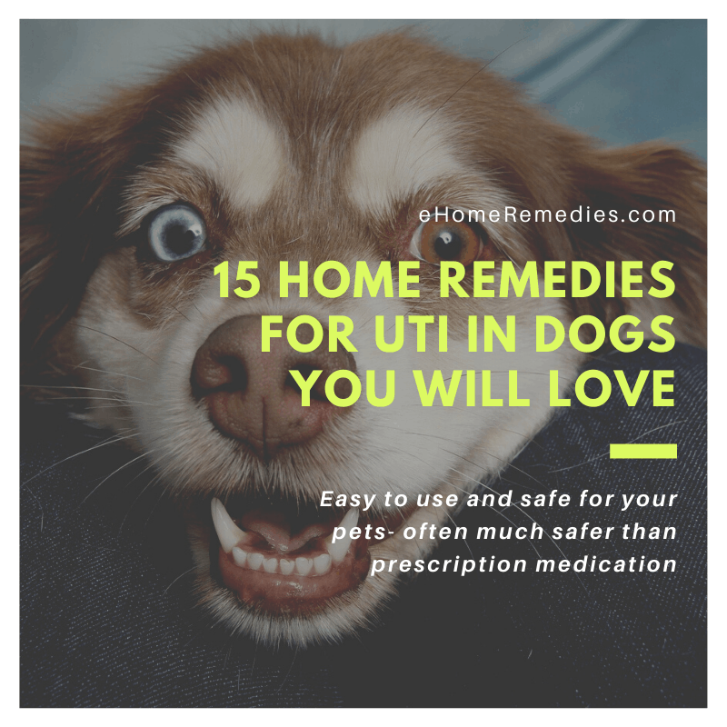 15 Home Remedies for UTI in Dogs You Will Love