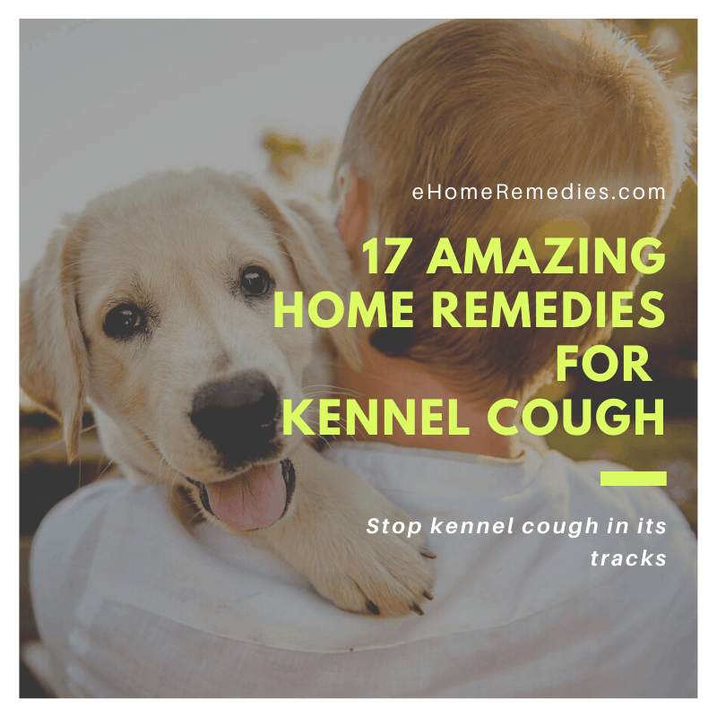 17 Amazing Home Remedies for Kennel Cough