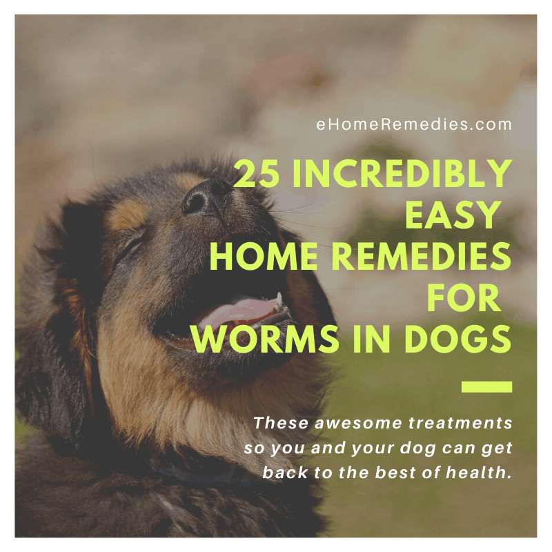 25 Incredibly Easy Home Remedies for Worms in Dogs