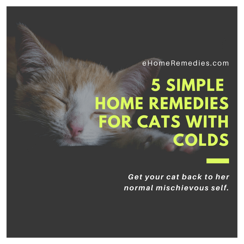 5 Simple Home Remedies for Cats with Colds