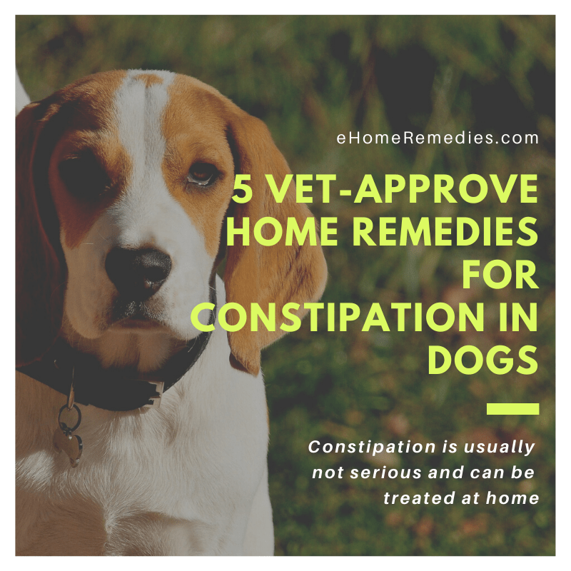 5 Vet-Approve Home Remedies for Constipation in Dogs
