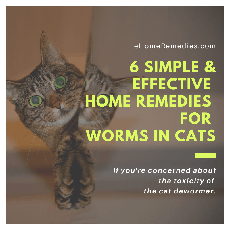 6 Simple and Effective Home Remedies for Worms in Cats