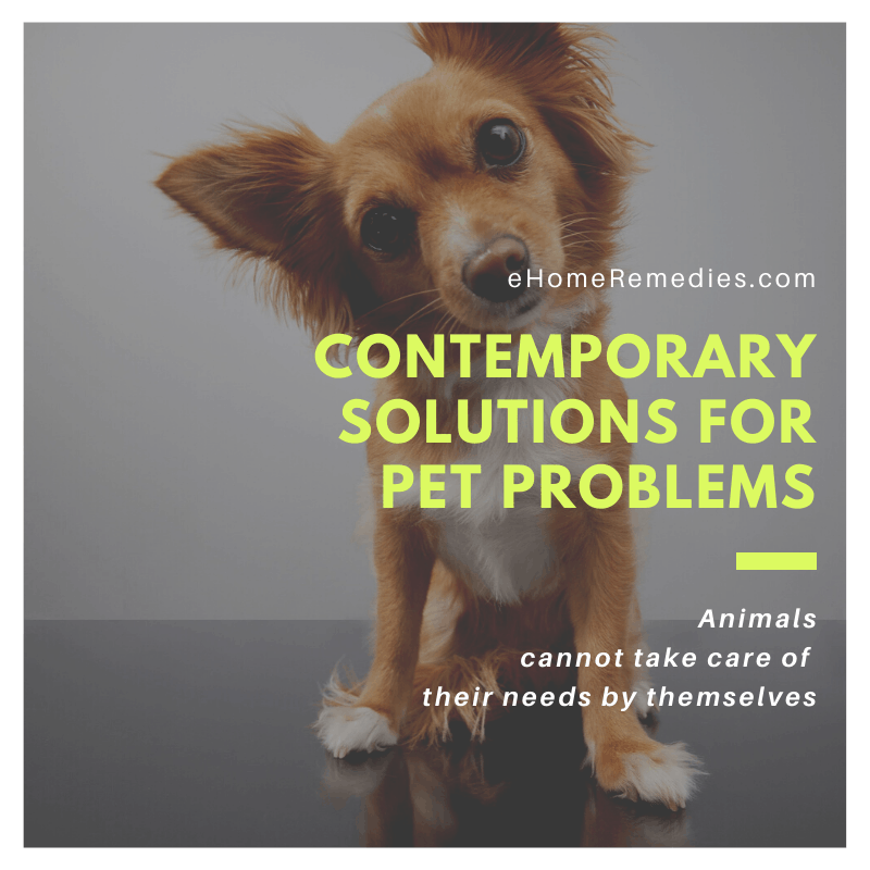 CONTEMPORARY SOLUTIONS FOR PET PROBLEMS