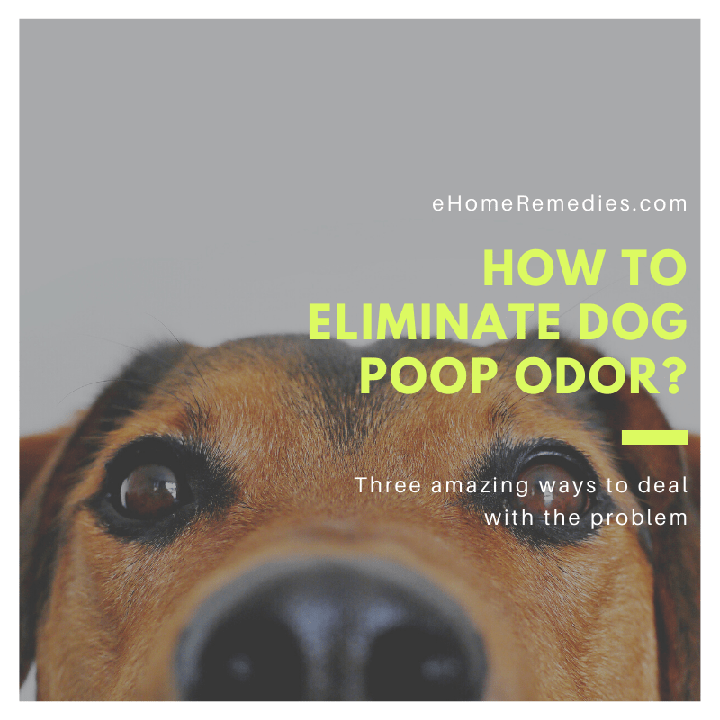 How to Eliminate Dog Poop Odor