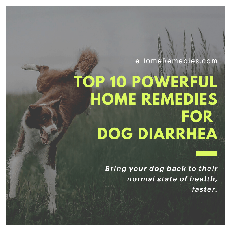 Top 10 Powerful Home Remedies for Dog Diarrhea