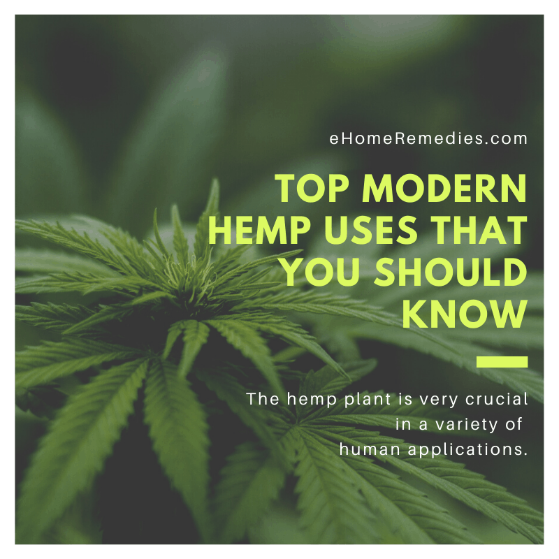 Top Modern Hemp Uses That You Should Know