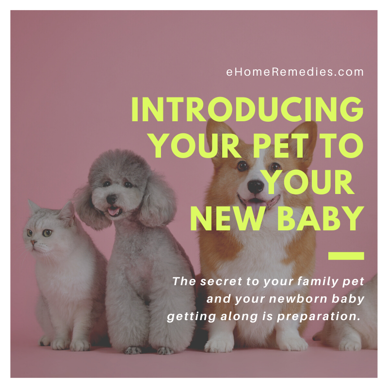 How to Introduce New Baby to Pets